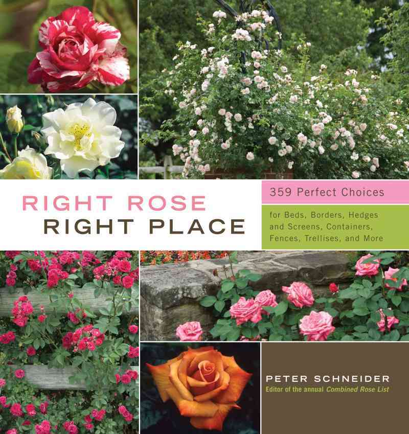 Right Rose, Right Place By Schneider, Peter